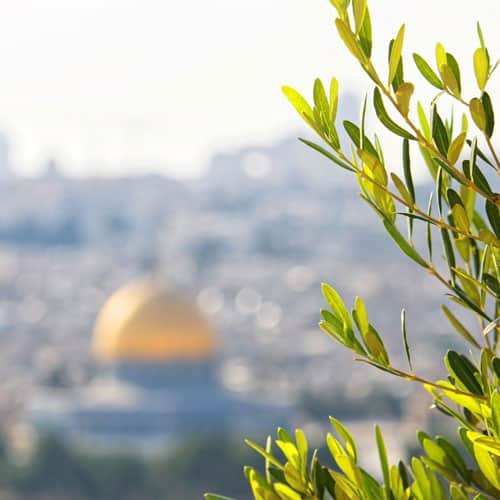 Leaves of an olive tree overlooking the temple mount, Jerusalem